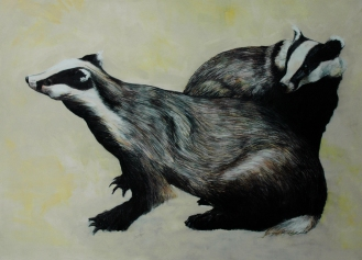 Badgers.