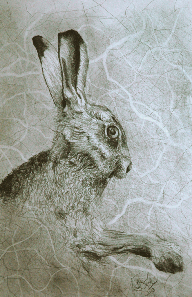 Hare Pencil Drawings Hare Pencil on Paper